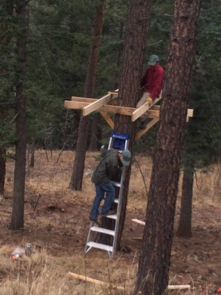 treehouseplatform1